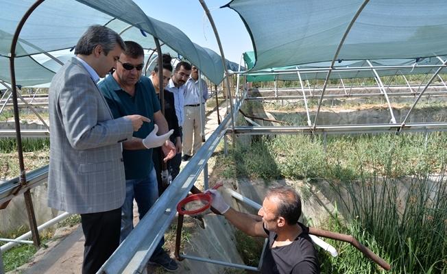 Kayseri'de ürettiği sülükleri dünyaya pazarlıyor