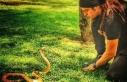 İllüzyonist Aref'i Kobra Isırdı: Bakanlık...
