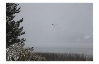 Abant Kar Yağışıyla Beyazlara Büründü