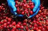 Türk Tarım Ürünleri İçin Markalaşma Atağı: Marka Geliştirme ve Tanıtım Ajansı Kurulacak