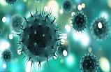 Koronavirüs Nedir, Nasıl Bulaşır, Belirtileri Neler?