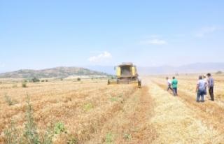 Türkiye'nin tahıl ambarı Güneydoğu'da buğday...