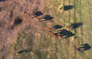 Kızılırmak Deltası'ndaki Yılkı Atları...