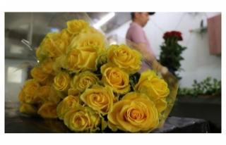 Anneler Günü için Aile ve Sosyal Hizmetler Bakanlığı'ndan...