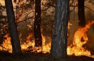 Kahveci: Ormanlarımıza Kast Etmek Bir Terör Eylemidir