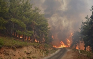 Bakan'dan Orman Yangınları Açıklaması