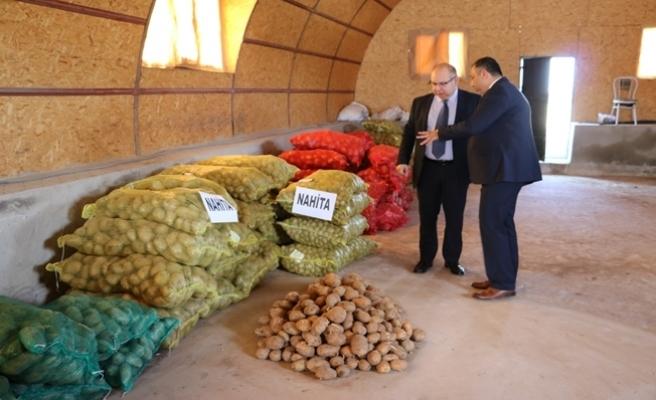 Niğde Patatesi 'Nahita' 15 ülkeye satılacak